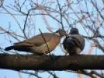 Życie miłosne, życie rodzinne ptaków