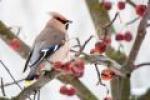 Biebrzańskie spotkania ptakolubów