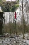 Odnaleźlismy nowe naturalne gniazdo bociana czarnego