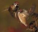 Ornitologiczne douczki