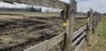 Remontujemy ogrodzenia wokół pastwisk